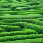 Unternehmensgründung anno 2015 – 14 Wochen im Dickicht